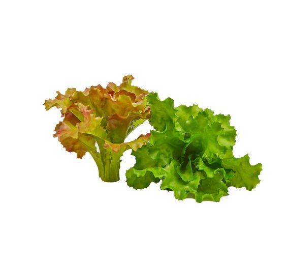 Lattuga Indivia artificiale X2 assortita di colore : Verdura decorativa artificiale