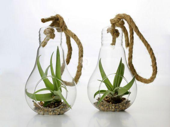 Bomboniere green: Pianta di Tillandsia in lampadina di vetro con corda