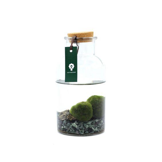 Alga Marimo in bottiglia