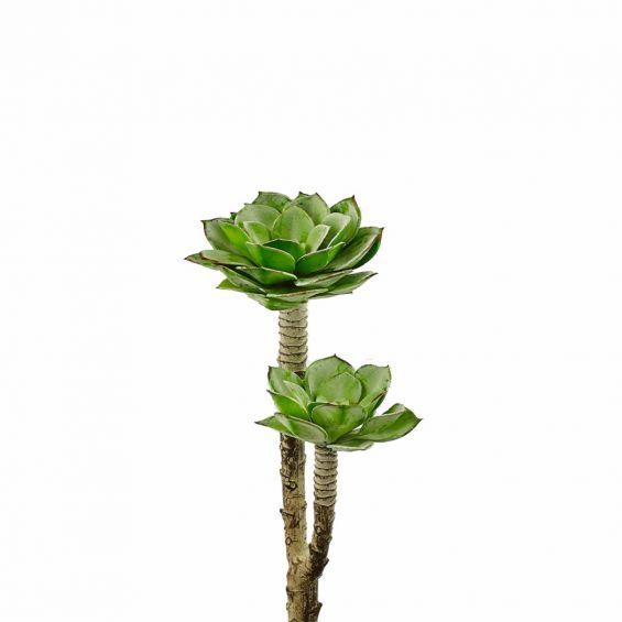 Echeveria: piante artificiali di qualità