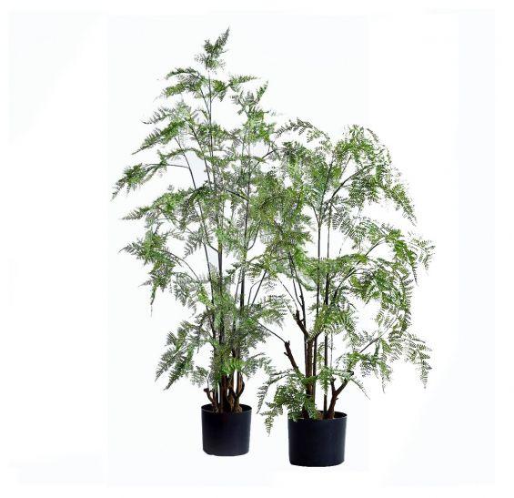 Felce Asparagi pianta con vaso: piante artificiali di qualità