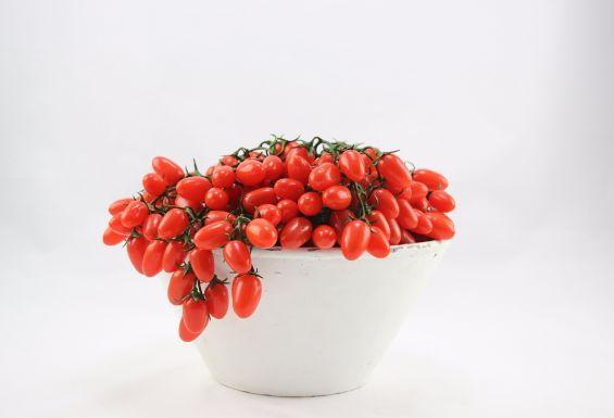 Pomodori finti: frutta e verdura finta