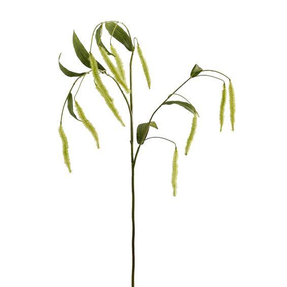 Tifa: rami decorativi per vasi o composizioni