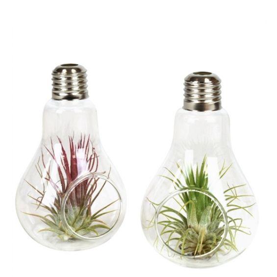 Bomboniere green: Pianta di Tillandsia in lampadina di vetro