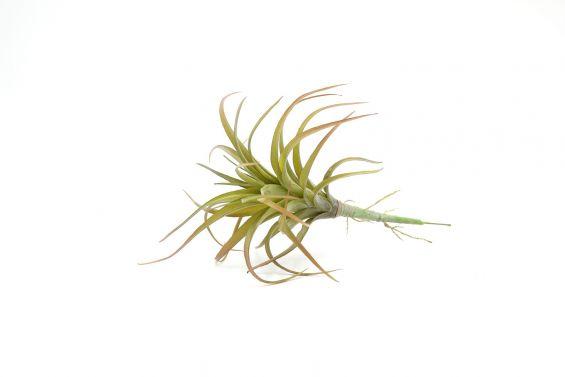 Cespuglio pianta Tillandsia: piante artificiali di qualità