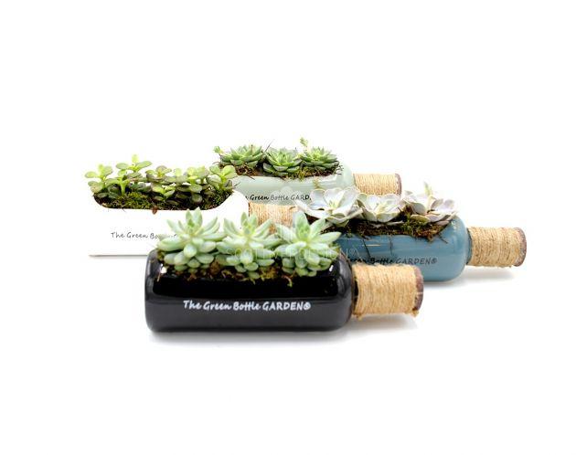 Composizione Green Bottle : Composizioni piante grasse in vaso bottiglia