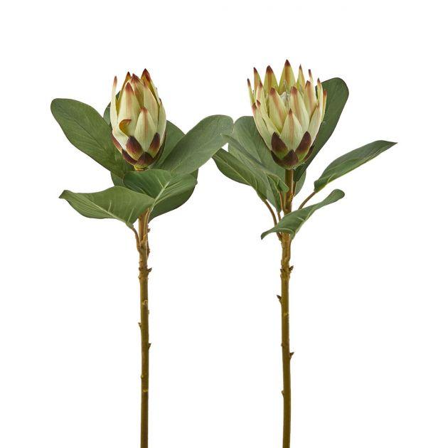 Protea Eden Ramo
