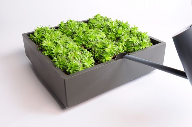 Karoo grigio: modulo per parete verde verticale o giardini verticali D&M