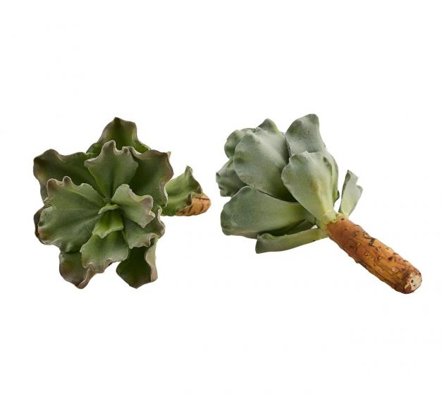 Pianta Succulenta artificiale H22