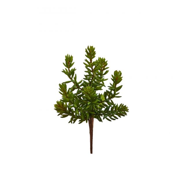 Pianta Succulenta West Pick H25