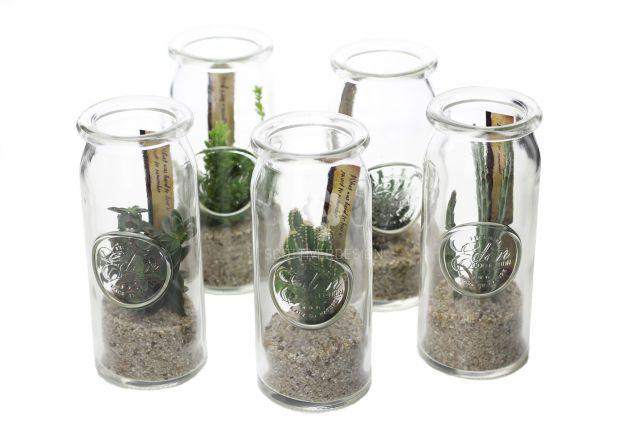 Bomboniere green: Mix piantine grasse in barattolo di vetro