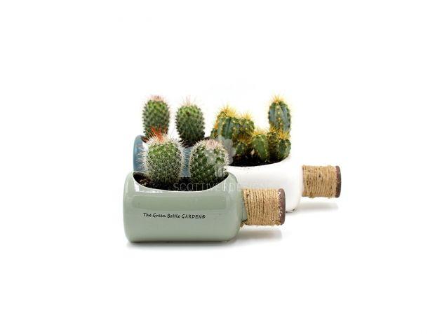 Little Green Bottle : Composizioni piante grasse in vaso bottiglia