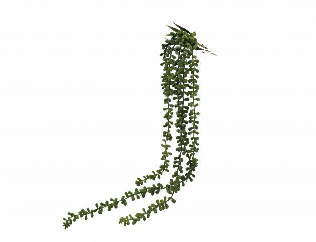 Senecio: piante artificiali di qualità