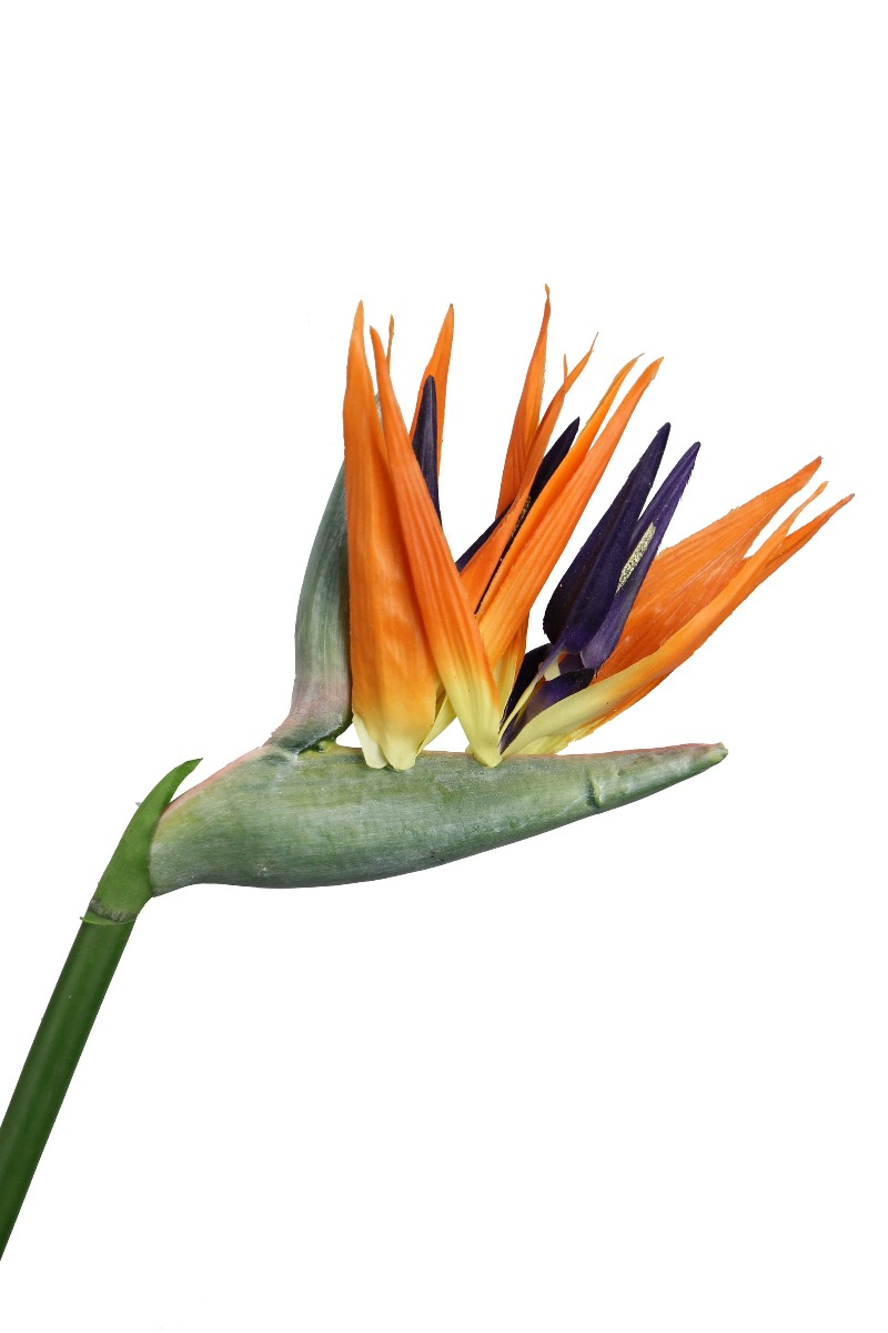 Fiore di Strelitzia: fiori artificiali di alta qualità