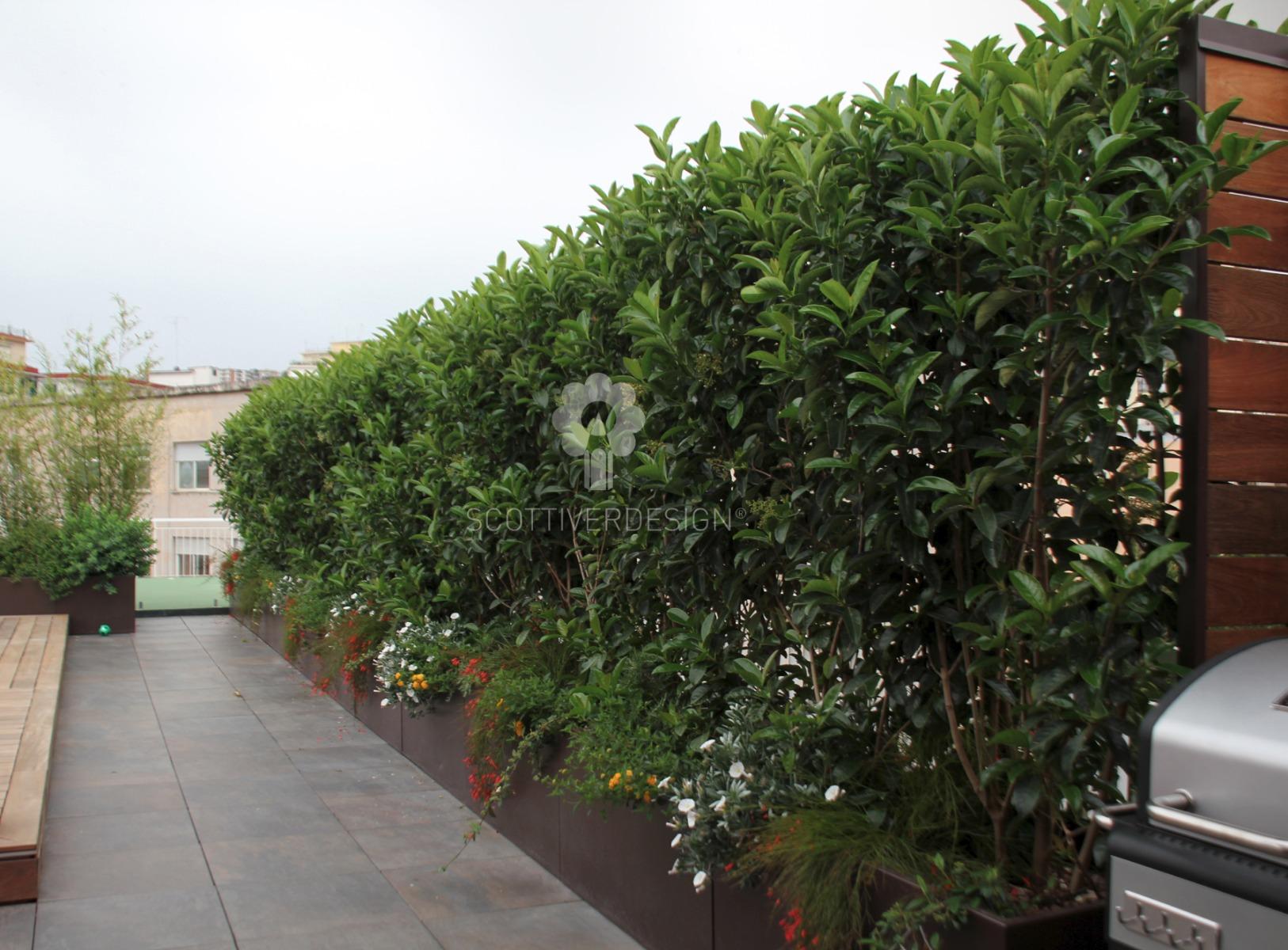 Giardino pensile sul terrazzo scottiverdesign for Siepe in vaso